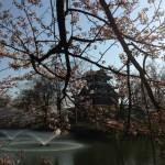 上越市高田公園高田城三重櫓と桜