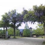 田上町総合公園YOU遊ランドの藤