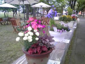 糸魚川市花いっぱいフェア2013