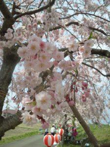 ひらうし桜まつり2017