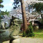 天津神社桜2020